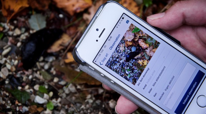 Anmeldelse – 3 forskellige apps til hverdagens naturregistrering