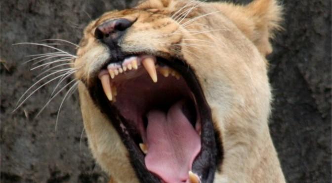 Løvemord og andre vigtige nyheder