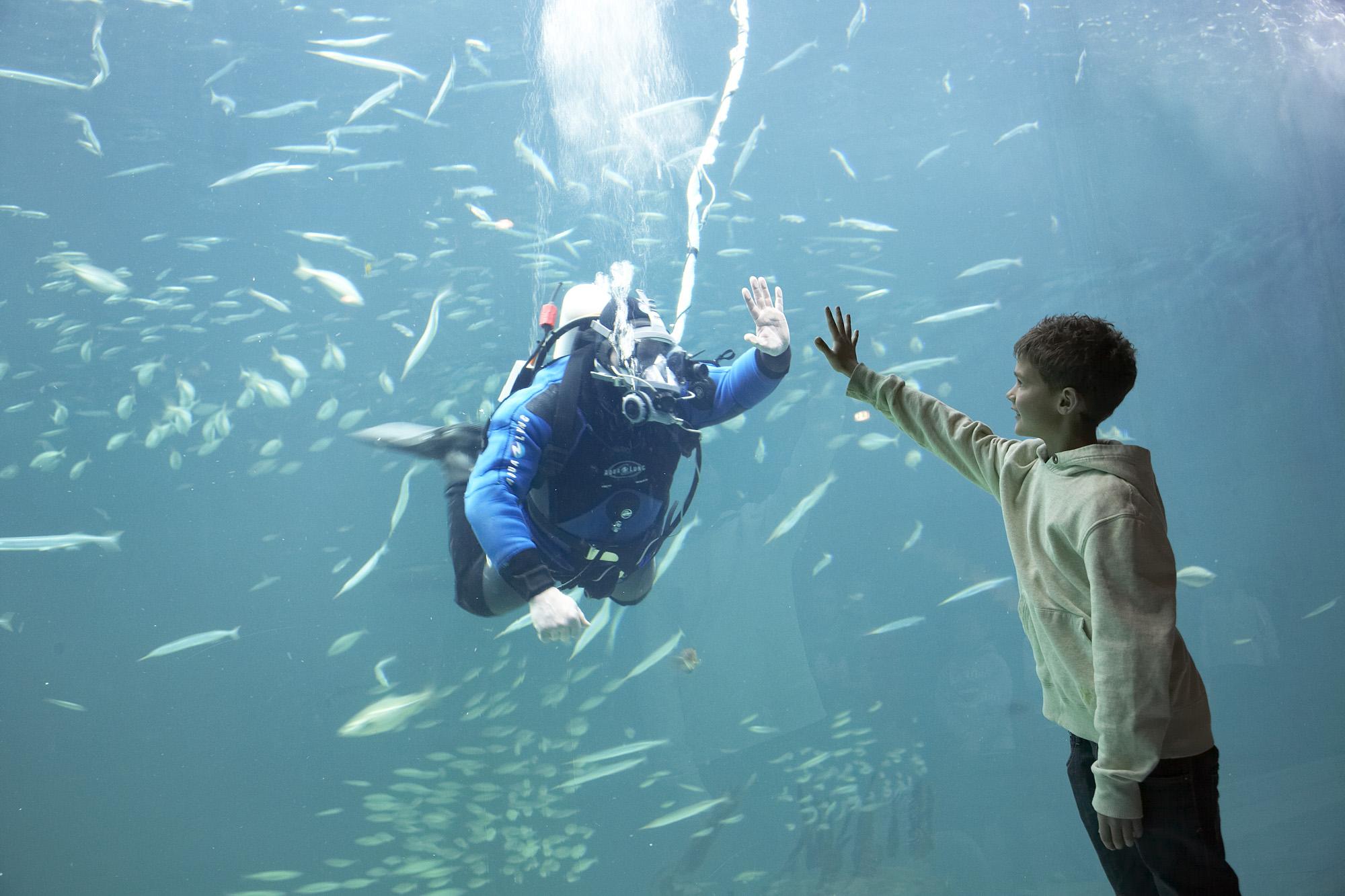 ©Nordsøen Oceanarium
