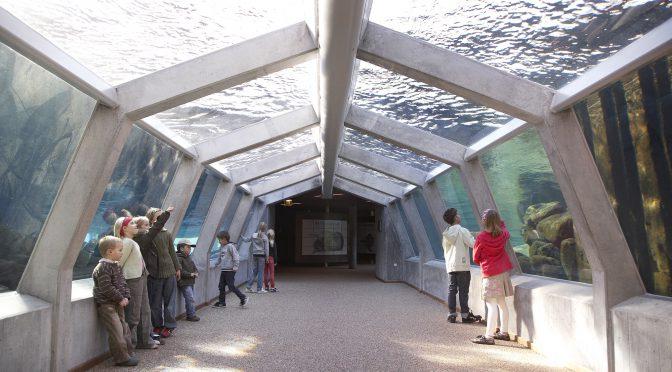 Nordeuropas største akvarium ligger i en lille dansk fiskerby