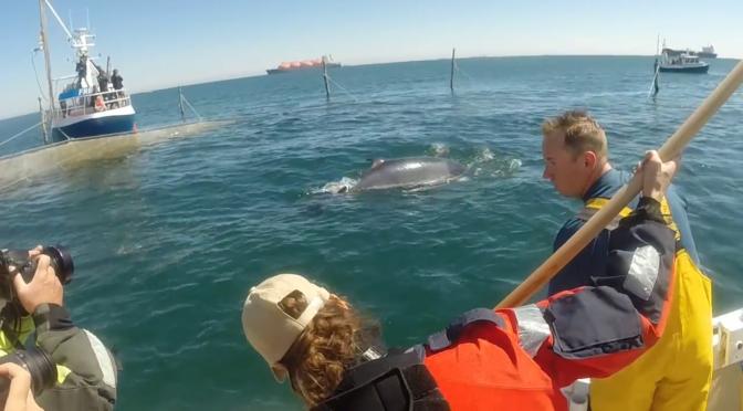 Følg hval i danske farvande live