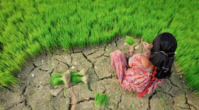 Wake up before it's too late: agroøkologi, et nyt paradigme for fødevareproduktion?