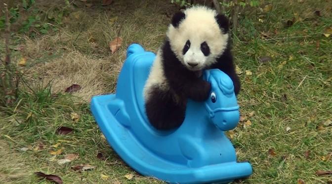 Skal pandaen ikke bare have lov at uddø?